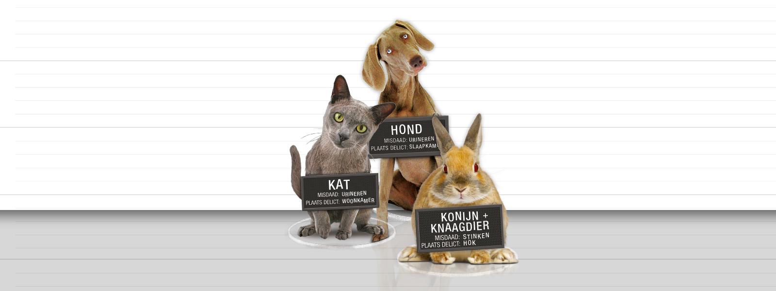 kat-hond-konijn
