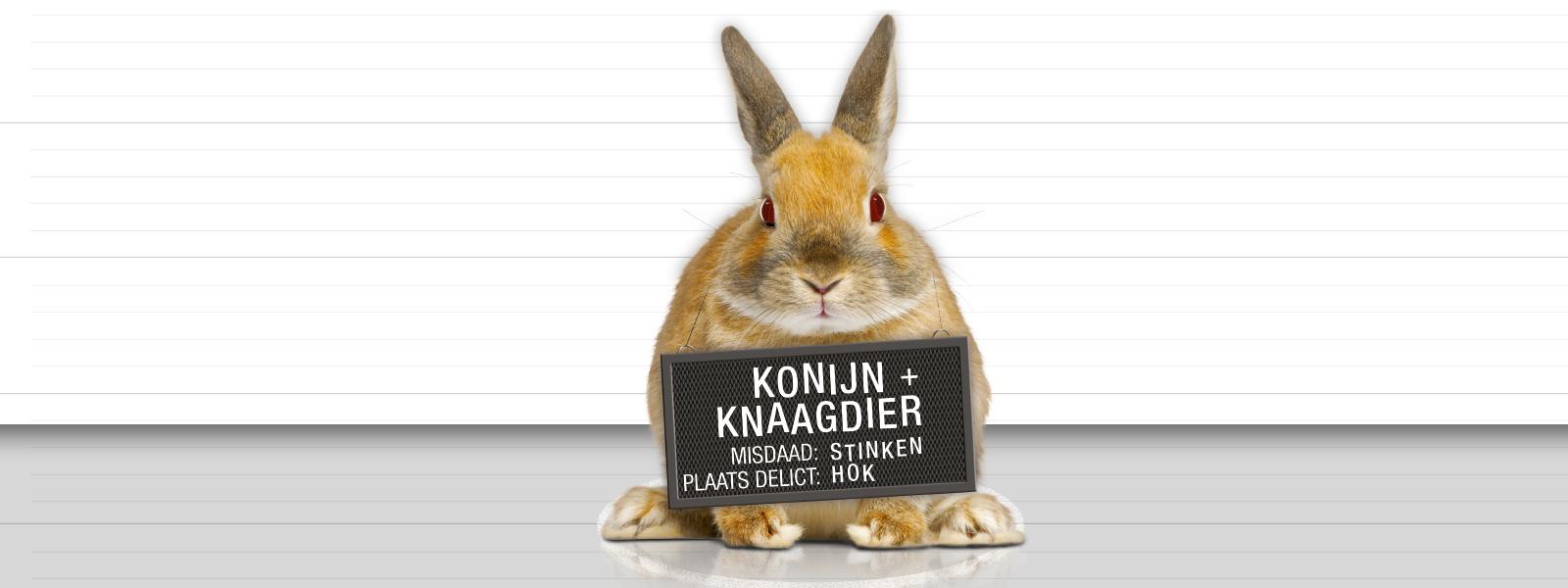 konijn_csi urine